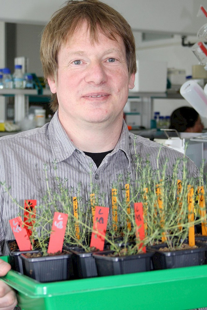 Professor Jörg Degenhardt, presenting thyme plants that look the same, but smell different.