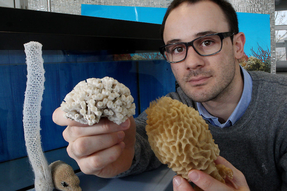 Dr. Filipe Natalio studies how sea sponges systematically create their perfect structures (photo: Maike Glöckner)