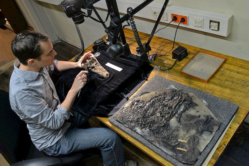"""Such a complete, well-preserved collection from the Eocene Epoch is unrivalled,"" Hastings says."