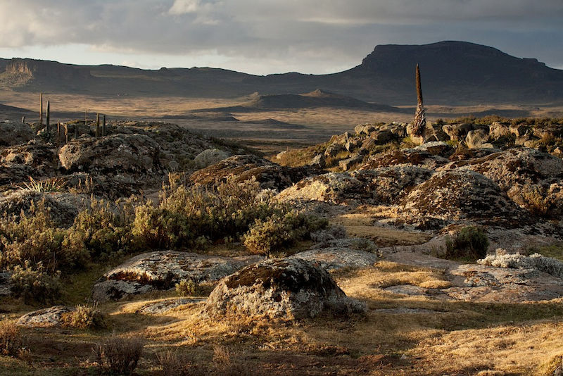 Soil scientists travel to the remote Bale Mountains to conduct research.