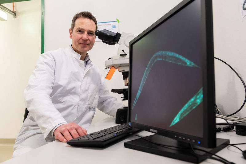 Wim Wätjen uses tiny threadworms in his research.