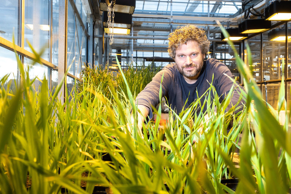 Plant scientist Marcel Quint in the greenhouse - he specialises in studying the evolution of plants.